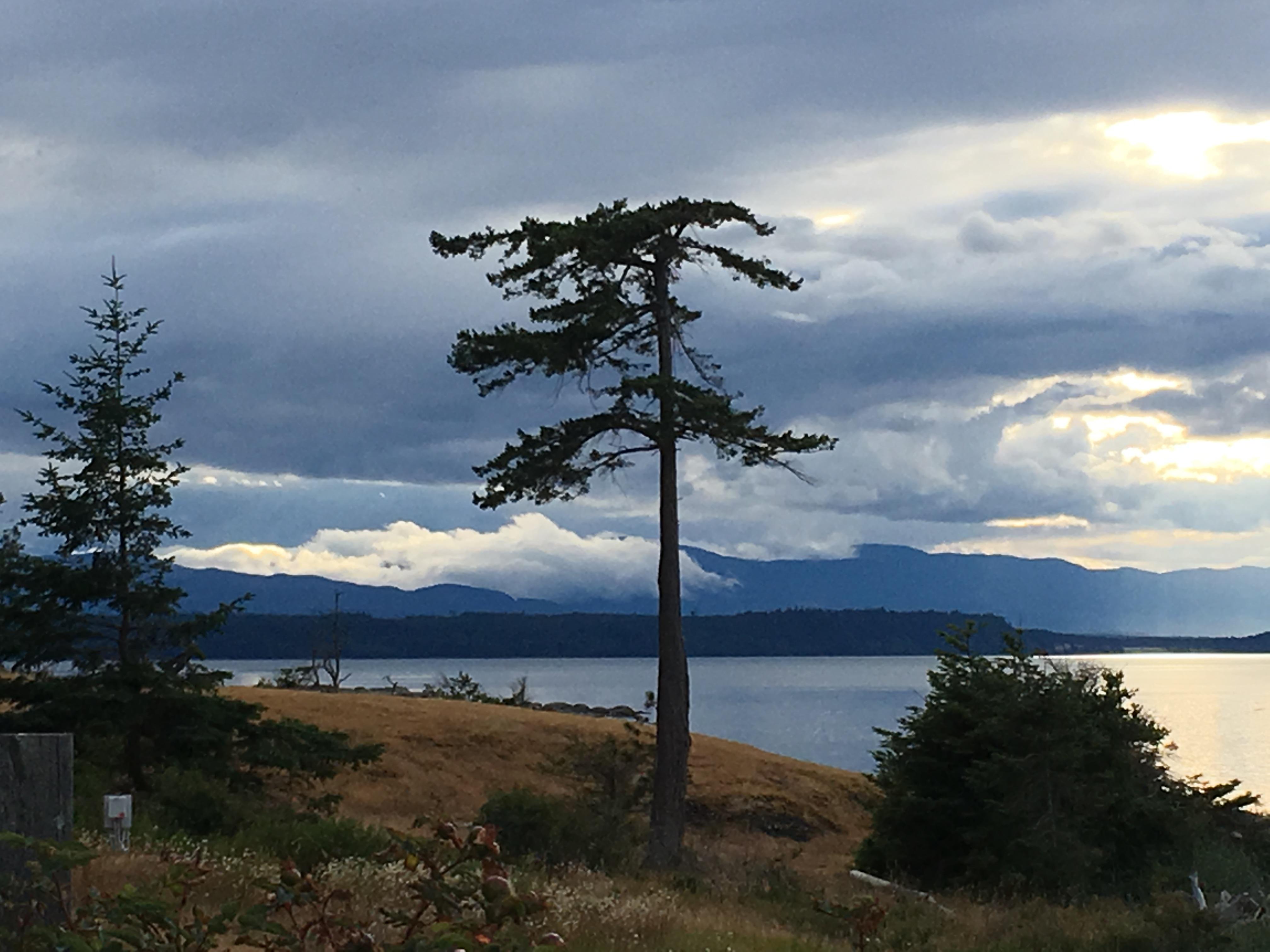Tree Grassy Point